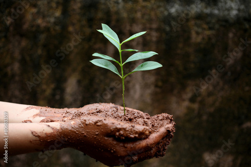 In de dag Palm boom Hands holding a young green plant