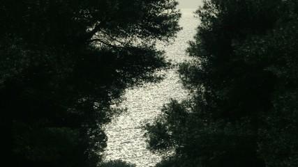 Vista tra gli alberi