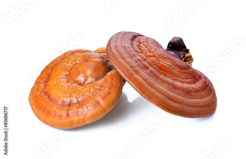 Lingzhi Mushroom Ganoderma Lucidum Isolated on white background - 80686717