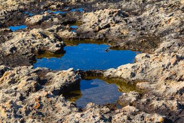 closeup pond in a stone