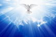 canvas print picture - Holy spirit dove