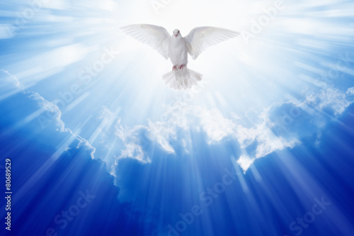 Deurstickers Vogel Holy spirit dove