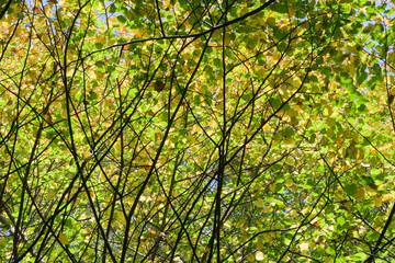 trees crown