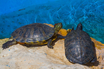 turtles near a water