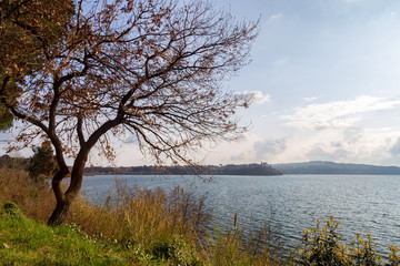 View of the lake and a tree on the left - Bracciano lake (Italy)