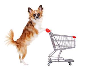 chihuahua dog pushing shopping cart