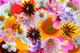 bright color flowers background
