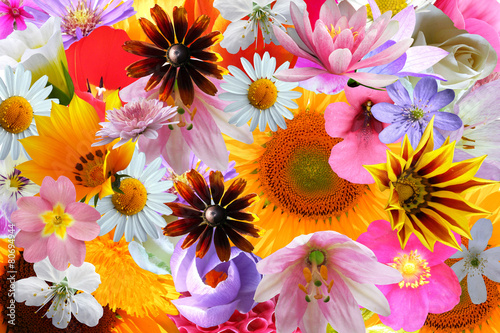 Foto op Canvas Dahlia bright color flowers background