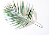 areca palm leaves