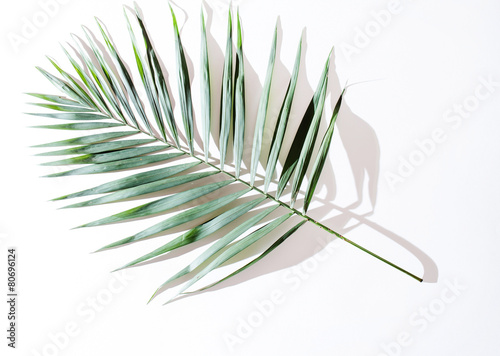 In de dag Palm boom areca palm leaves