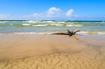 Wood trunk on Baltic Sea beach near Leba, Poland