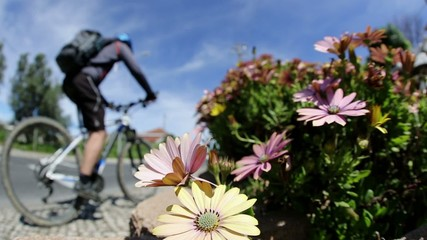 garden with flowers next to a road with a cyclist and cars