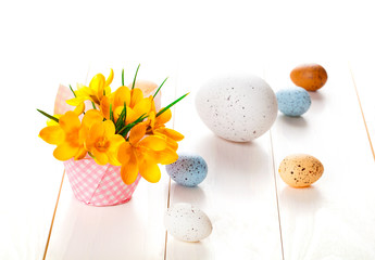 crocus flowers on white wooden background, spring decoration wit