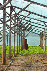 Wooden film greenhouse after harvest