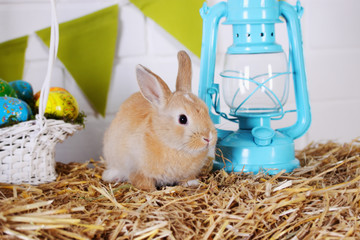 rabbit near the lantern