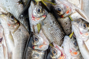 Fresh Caught Fish Closeup