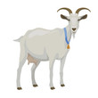 White goat, side view, isolated - 80708342
