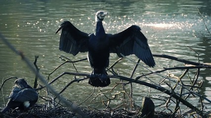 Swamp Bird Stretches Wings
