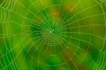 Spider web with water drops background