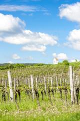 spring vineyard near Hnanice, Southern Moravia, Czech Republic