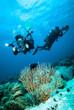 diver take a photo video coral kapoposang indonesia scuba diving - 80717342