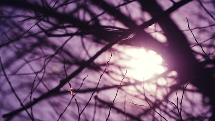 Early Morning Sunlight Shines Through Bare Tree Branches