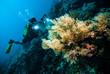 diver take a photo video coral kapoposang indonesia scuba diving - 80718581