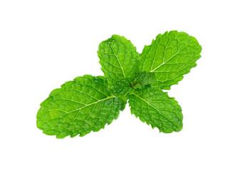fresh mint leaf isolated on white background