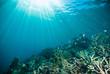 sun shine scuba diver kapoposang sulawesi indonesia underwater - 80719953