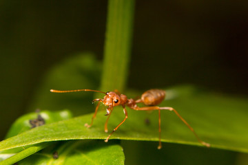 close-up ant on green leaf