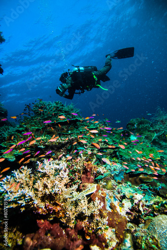 Foto op Canvas Duiken diver photo video seafan kapoposang indonesia scuba diving