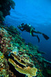 diver photo video seafan kapoposang indonesia scuba diving - 80721782