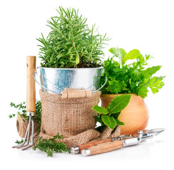 Fresh green herbs with garden tools. Isolated on white