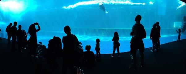 mondo marino