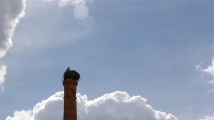 Stork's standing in nest