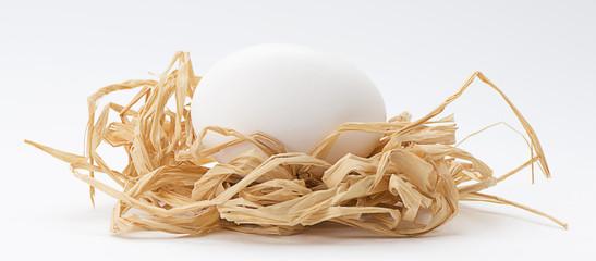White Egg in Nest