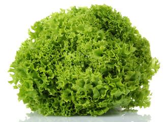 Lolo rosso, Lettuce