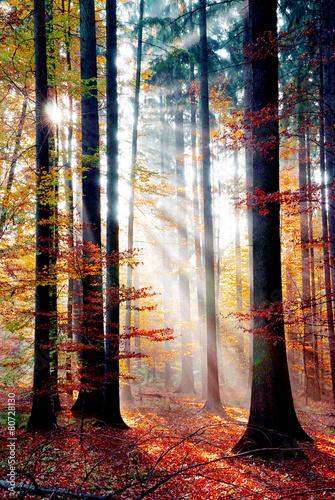 Sonnenstrahlen im Nebewald - 80728130