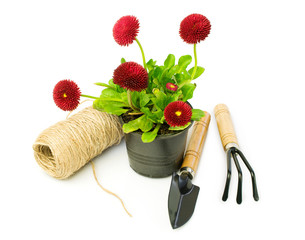 Red daisies and garden tools