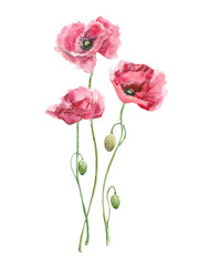 watercolor red flowers (poppies)