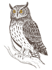 Realistic image of owl