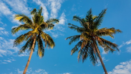 Coconut tree in garden on daylight