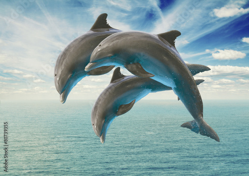 three  jumping dolphins - 80739355