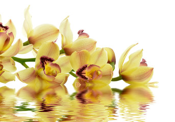 Kwitnąca orchidea
