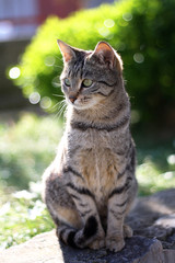 Young tabby brown cat sitting in the garden. Selective focus.