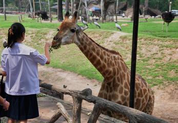 giraffe and a girl