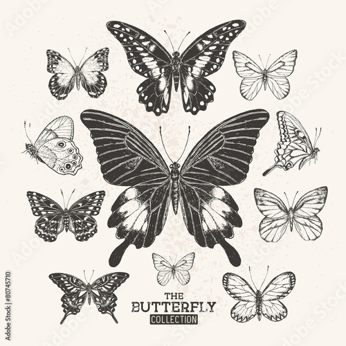 The Vintage Butterfly Collection - 80745710