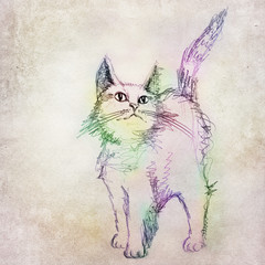 Colorful cat drawing