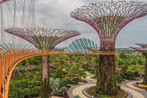 Foto op Canvas Singapore Singapore Supertrees