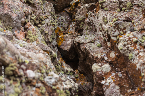 natural colored pattern on a single stone with moss and fungus w